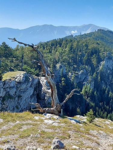 OeTK-Neunkirchen-Senioren Wanderung Gauermannhütte 20200911-002